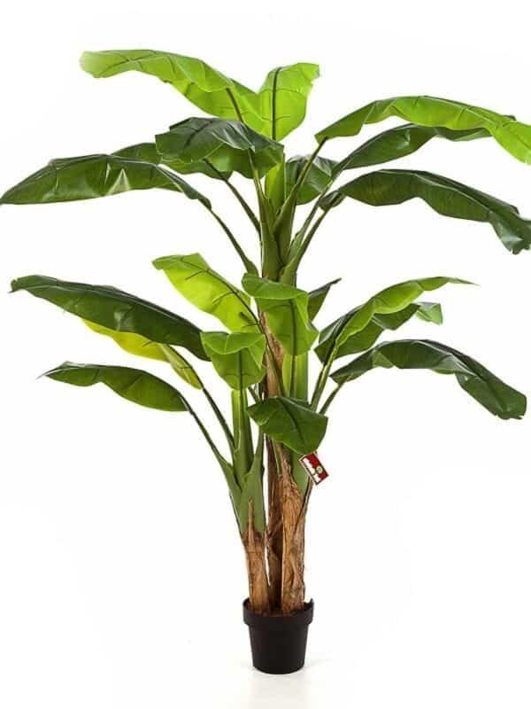 Banana Stablo