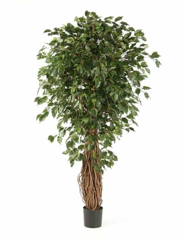 Ficus Liana Deluxe