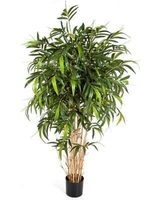 Natural Bamboo Stablo - Proizvodi
