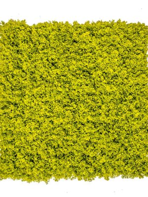 Zeleni Zid Islandska Mahovina