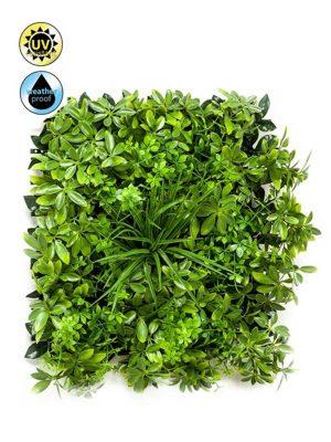 Zeleni Zid Schefflera Mix